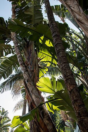Palmen der Welt