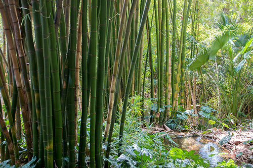 Ein echter Bambuswald
