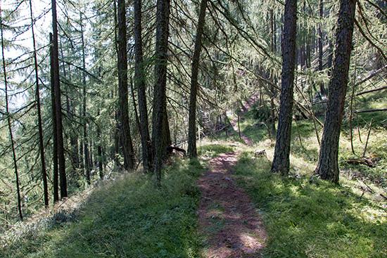 Es geht durch lichten Wald...