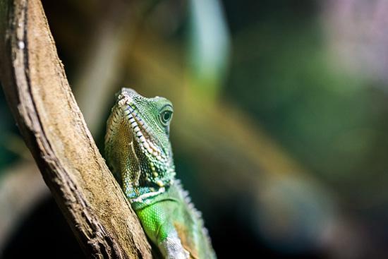 Im Vivarium: Gecko lässt grüßen