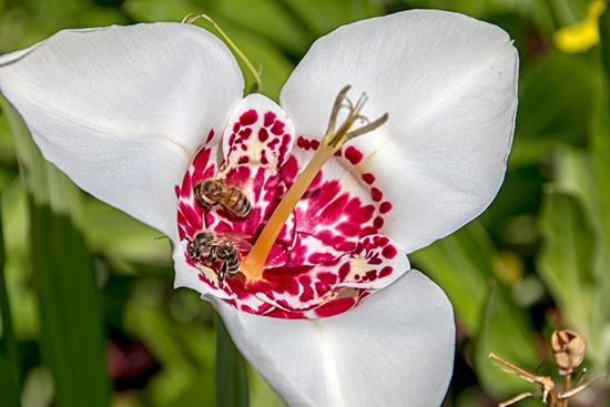 Bienen auf Beutezug