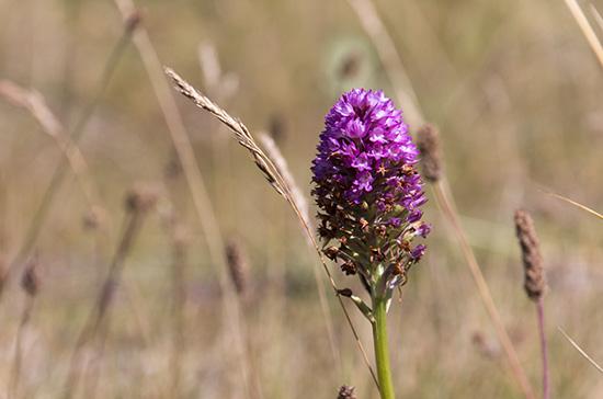 Orchideen ...