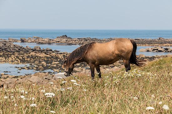 Batz-Pferd